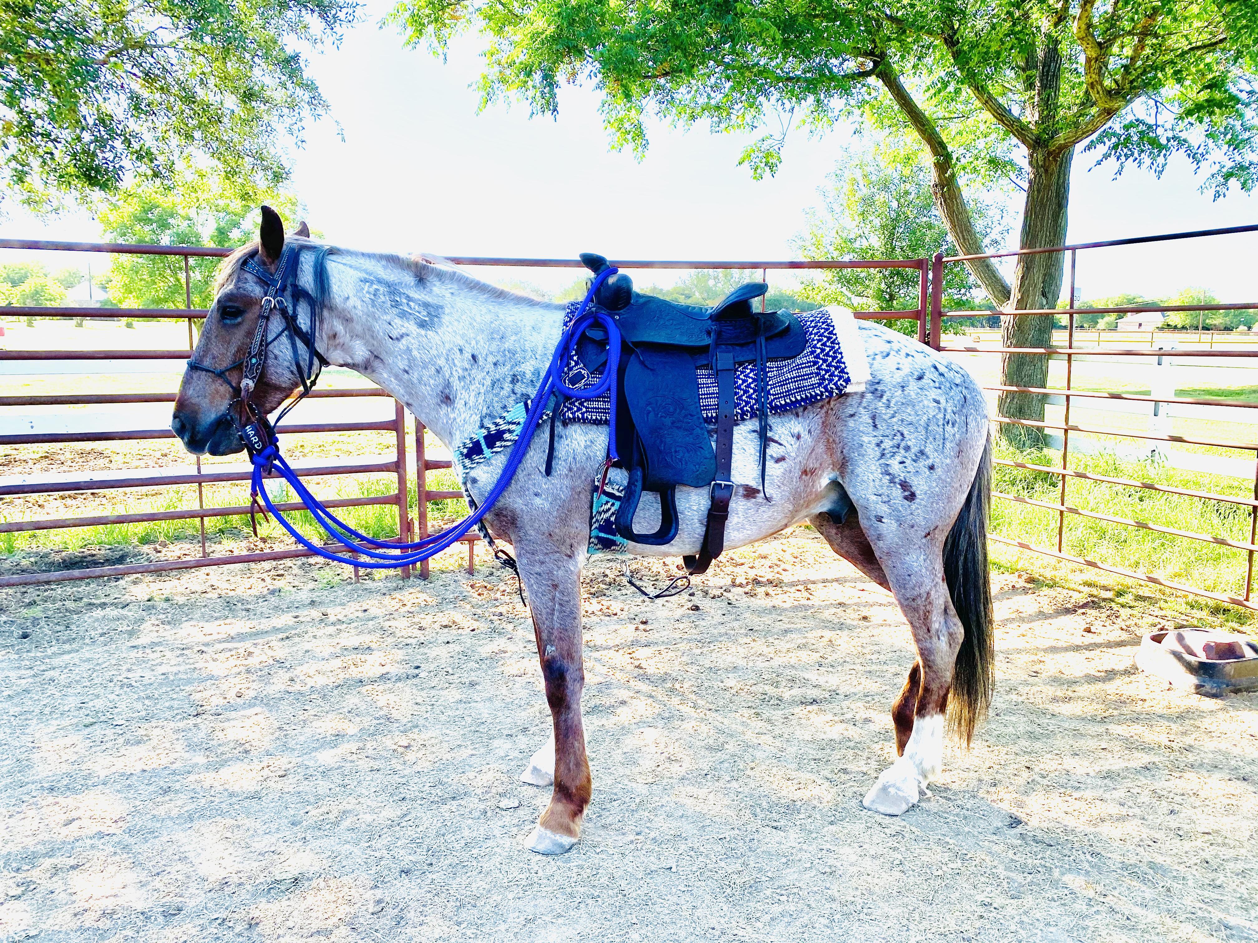 Courage Vs Stupidity Gardner Hard Luck Horse Farm